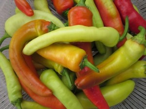 Hot Banana Peppers, also known as Hungarian Hot Wax