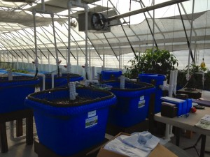 Family owned, commercial aquaponics farm in Versailles, Kentucky